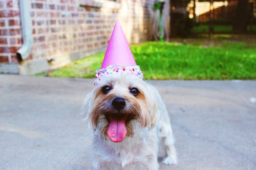 dog celebrating the birthday of your home inspection company