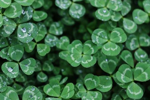 four leaf clover luck as a home inspector