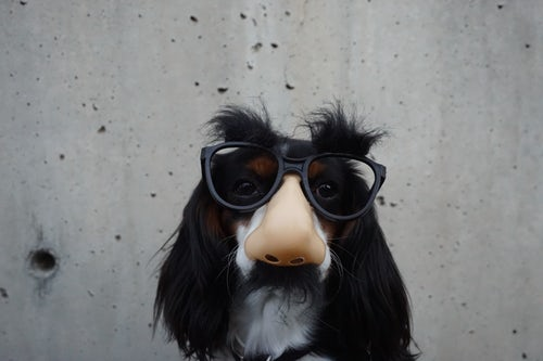 a dog disguised as a home inspection customer