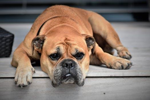 pic of a sad dog