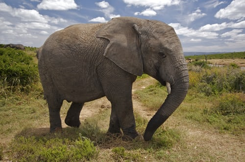 eating the elephant that is home inspection report problems