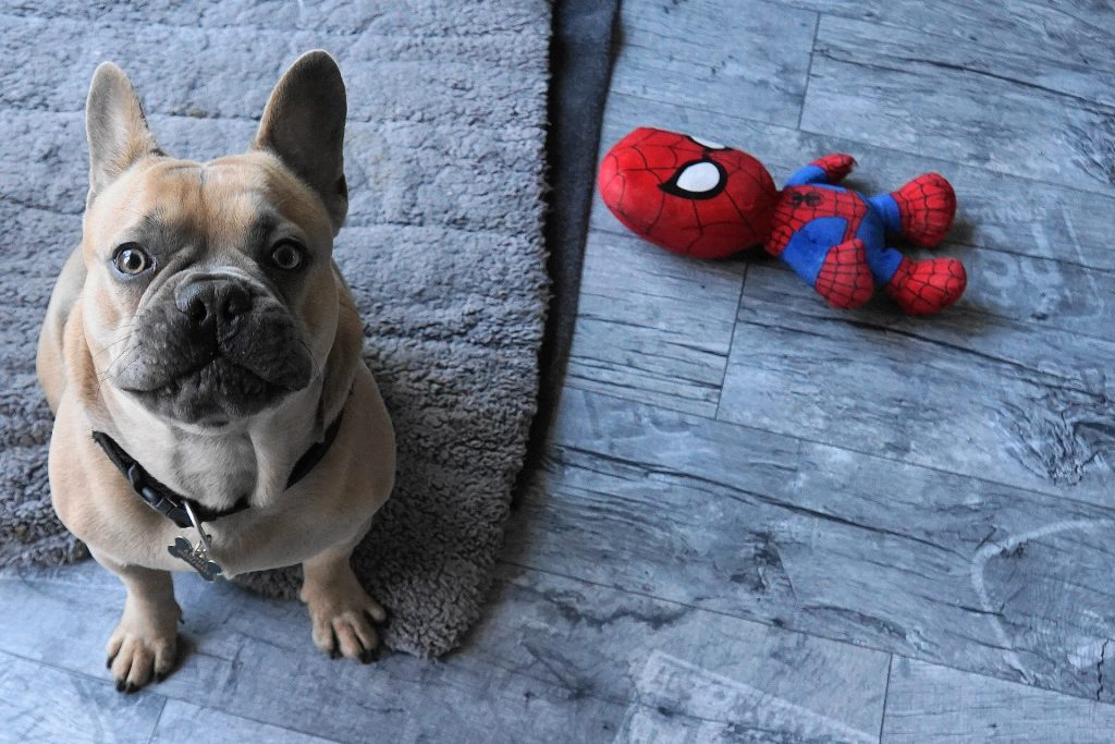 spiderman worried about doing a bad home inspection