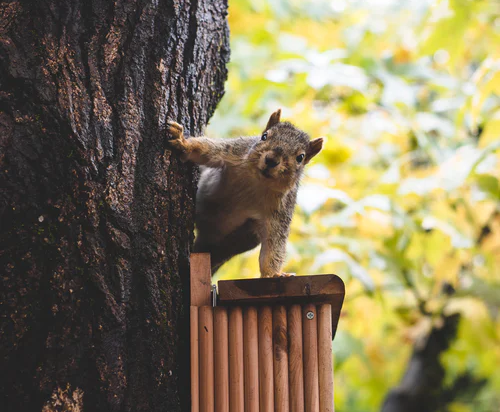 squirrel distracting me from doing a home inspection